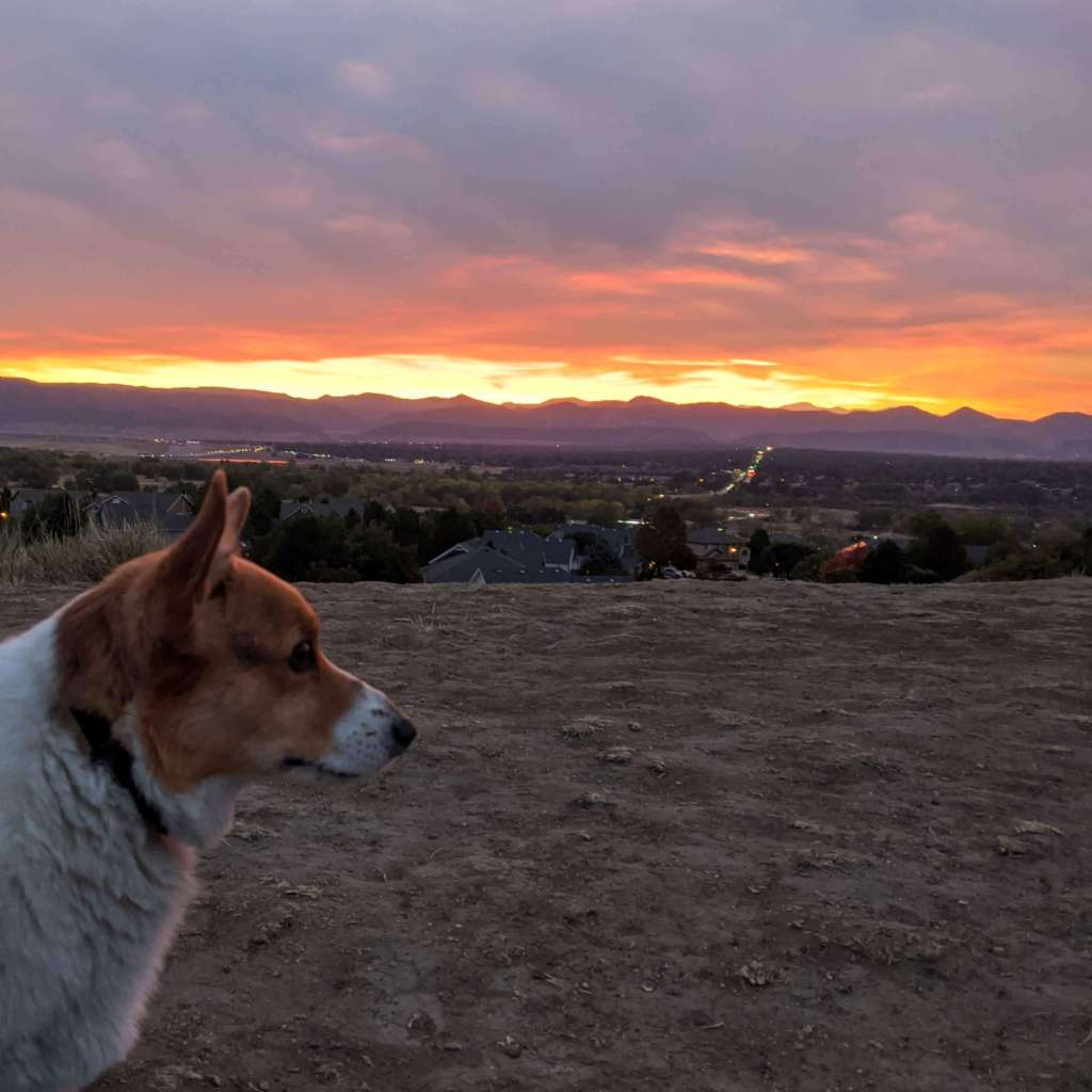 Jackass Hill Park - Littleton Colorado - Corgi watching the sunset